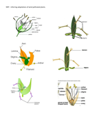 SRiP – Inferring adaptations of wind pollinated plants..docx