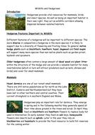 Hedgerow flora and fauna.docx