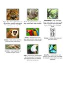 Rainforest Animals.docx