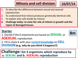 mitosis and cell division.pptx