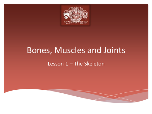 The Skeletal System by Jon.Dudbridge - Teaching Resources - TES