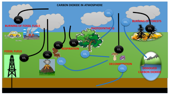 The Carbon Cycle with animation