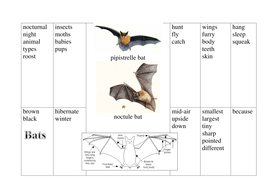 Bat writing prompt sheet