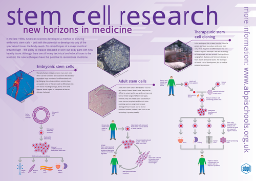 Stem Cell Lesson by lindsayoliver34 Teaching Resources Tes – Stem Cell Worksheet