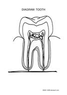 Tooth Diagram (Lesson 1).pdf