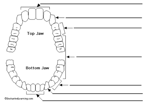 Teeth Unit Plan By Capitalzab Teaching Resources Tes