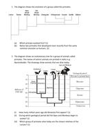 Evolutionary tree questions.docx