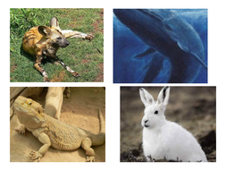Animal pictures and habitats