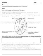 Heart Dissection.docx