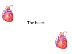 Heart structure and the cardiac cycle