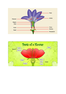 Dissected Plant.docx