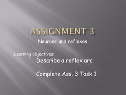 Assignment 3 powerpoint.pptx
