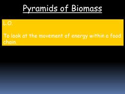 Pyramids of Biomass - B1 Revision