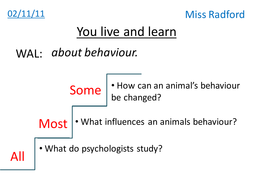 Animal behavior - Year 8