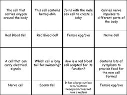 Specialized Cells Quiz Quiz Trade